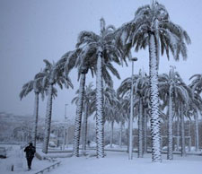 130111_snow_on_palms_225