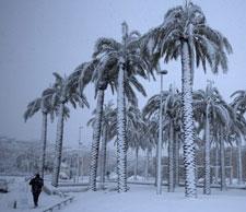 130111_snow_on_palms_225