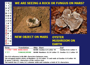 aMars_fungus_on_mars_matrix