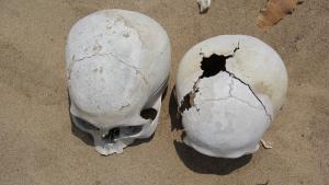 Marzulli_chongos-skull